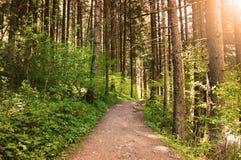 Suggestivt solnedgångljus i skogen Arkivfoto