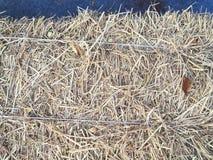 Sugrör i lantgård royaltyfri foto