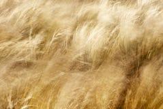Sugrör i vinden Arkivbilder