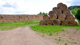 Sugrör på fältet Arkivbild