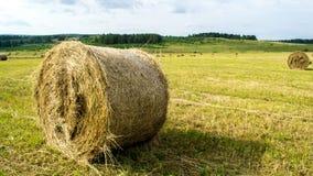 Sugrörbal på fältet i sommar arkivfoton