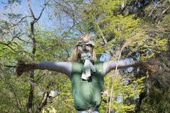 Sugrörfågelskrämman bland de gröna träden Royaltyfri Foto