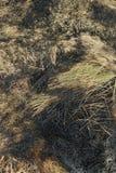 Sugrörtexturbakgrund Arkivbilder
