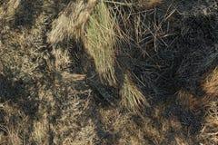 Sugrörtexturbakgrund Royaltyfria Bilder