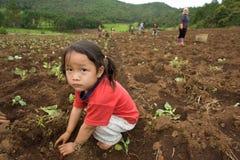 Sui bambini del fianco di una montagna del gruppo etnico di Hmong, diverta piantando il cavolo Fotografie Stock