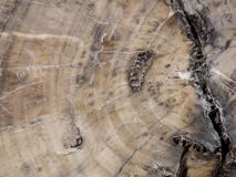 Sui modelli vicini di legno petrificato immagine stock libera da diritti