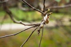 Sui rami delle fedi nuziali di un albero immagine stock libera da diritti