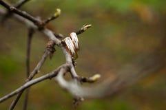 Sui rami delle fedi nuziali di un albero fotografia stock libera da diritti