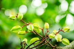 Sui rami di frutta Fotografia Stock