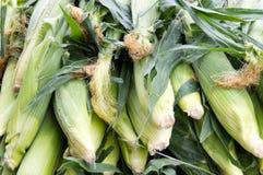 Suikermaïs bij de markt van de landbouwer Stock Afbeeldingen