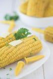 Suikermaïs op de maïskolf Stock Foto's