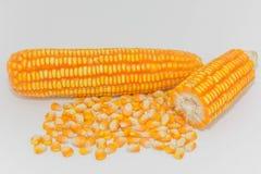Suikermaïs op witte achtergrond Stock Foto's