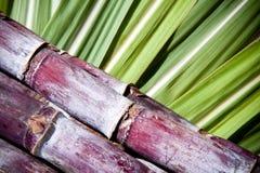 Suikerriet Stock Foto