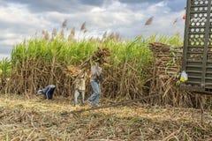 Suikerriet aan wagenvrachtwagen wordt gedragen, Tay Ninh-provincie, Vietnam dat stock foto's