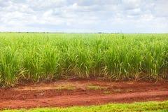 Suikerrietaanplanting Royalty-vrije Stock Foto's