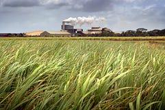 Suikerrietgebied stock afbeeldingen
