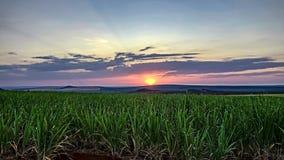 Suikerrietgebied bij zonsondergang in Sao Paulo, Brazilië stock fotografie
