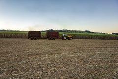suikerrietgebied het mechanische oogsten met een tractor dragende oogst stock afbeelding