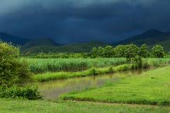 Suikerrietgebied onder onweer royalty-vrije stock foto