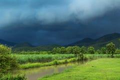 Suikerrietgebied onder onweer stock foto