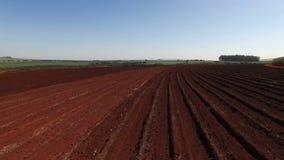 Suikerrietgebied in Sao Paulo Brazil - Antenne dolly binnen over de grond van het suikerrietgebied - suikerriet ingediende grond stock videobeelden
