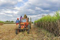 Suikerrietgebied, Tay Ninh-provincie, Vietnam Royalty-vrije Stock Foto