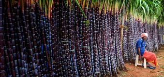 Suikerrietopslag royalty-vrije stock fotografie