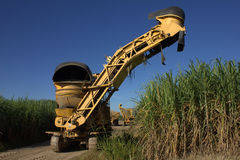 Suikerrietsnijder Stock Foto