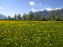 Suiss traditional spring  landscape Royalty Free Stock Photo