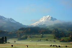 Suisse harmoni royaltyfri foto