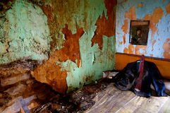 Suit in abandoned old house. Uit and peeling wall in abandoned old house in ireland Stock Photo
