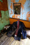 Suit in abandoned old house Royalty Free Stock Photography