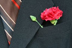 Suit and carnation Stock Photos