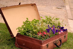 Suitcase with flowers Stock Image