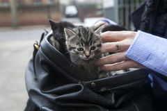 Suitcase with kittens Stock Photos