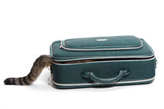Suitcase with tail. Cat sits in a suitcase and you only see the tail Stock Photography