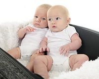 Suitcased Babies Stock Images