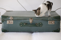 Suitcases back retro. Vintage and cat Royalty Free Stock Photos