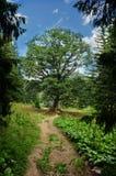 Suivez le chemin à l'arbre de la durée isolé Photographie stock