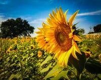 Suivez le Sun Image libre de droits