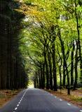 Suivez votre propre route par la forêt Photo libre de droits