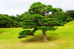 Suizenji Garden in Kumamoto Royalty Free Stock Photo