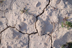 Suje a seca que terra seca a textura rachada moeu -3 Imagem de Stock