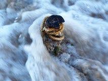 Sujet dans l'eau. Photo libre de droits