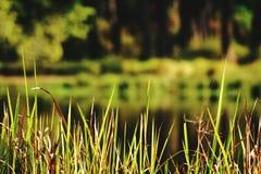 Sujets d'herbe images libres de droits