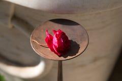 sujets de décoration du Ràjasthàn d'Inde un après-midi ensoleillé dans le jaip Image libre de droits