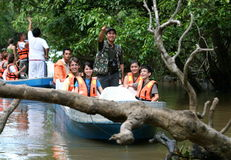 Sukau river cruise. Tourists enjoy a wonderful travel discovery through the beautiful scenery of the Mangrove Forest Kinabatangan River, Sabah, Malaysia Stock Images