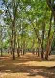 Sukhothai parkerar nationellt historiskt, Sukhothai, Thailand fotografering för bildbyråer