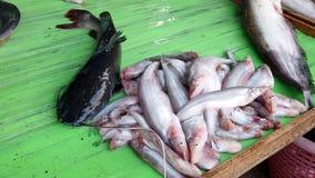Sukhothai, Tail?ndia - 2019-03-06 - peixe-gato senta-se em vivo contr?rio seco e na espera para ser vendido para o jantar no merc vídeos de arquivo