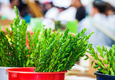 The Sukkot in Jerusalem Royalty Free Stock Images